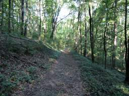 Lookout Mountain Trails
